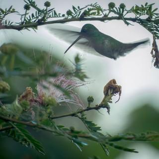 Yoga Retreat Costa Rica Kolibri
