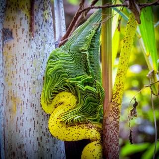 Costa Rica - Exotic Plant