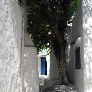 Yoga Retreat Mykonos Town Tree