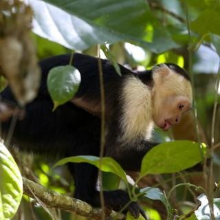 Yoga Retreat Costa Rica Monkey