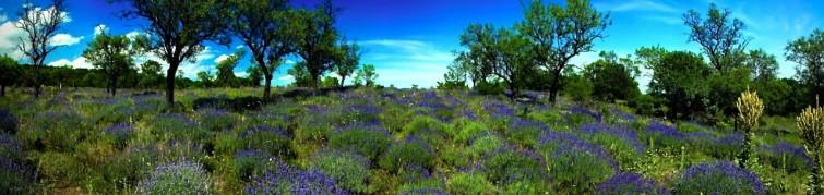 Yoga Retreat Ungarn Lavendelfeld